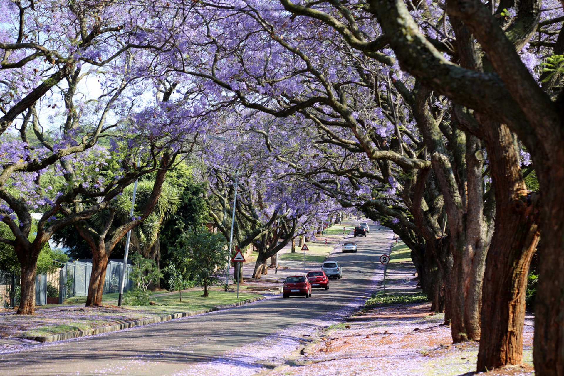 Best time for Jacarandas in Pretoria in South Africa 2020