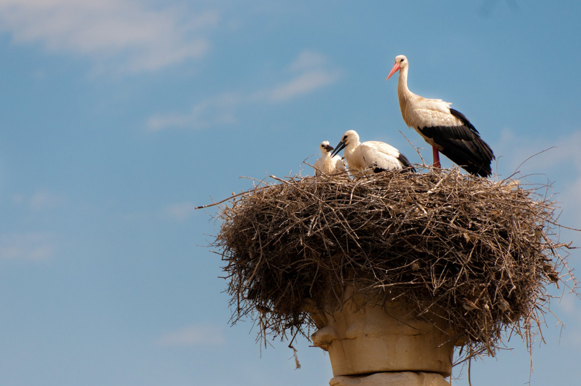 Storks of Volubilis in Morocco 2019 - Best Time