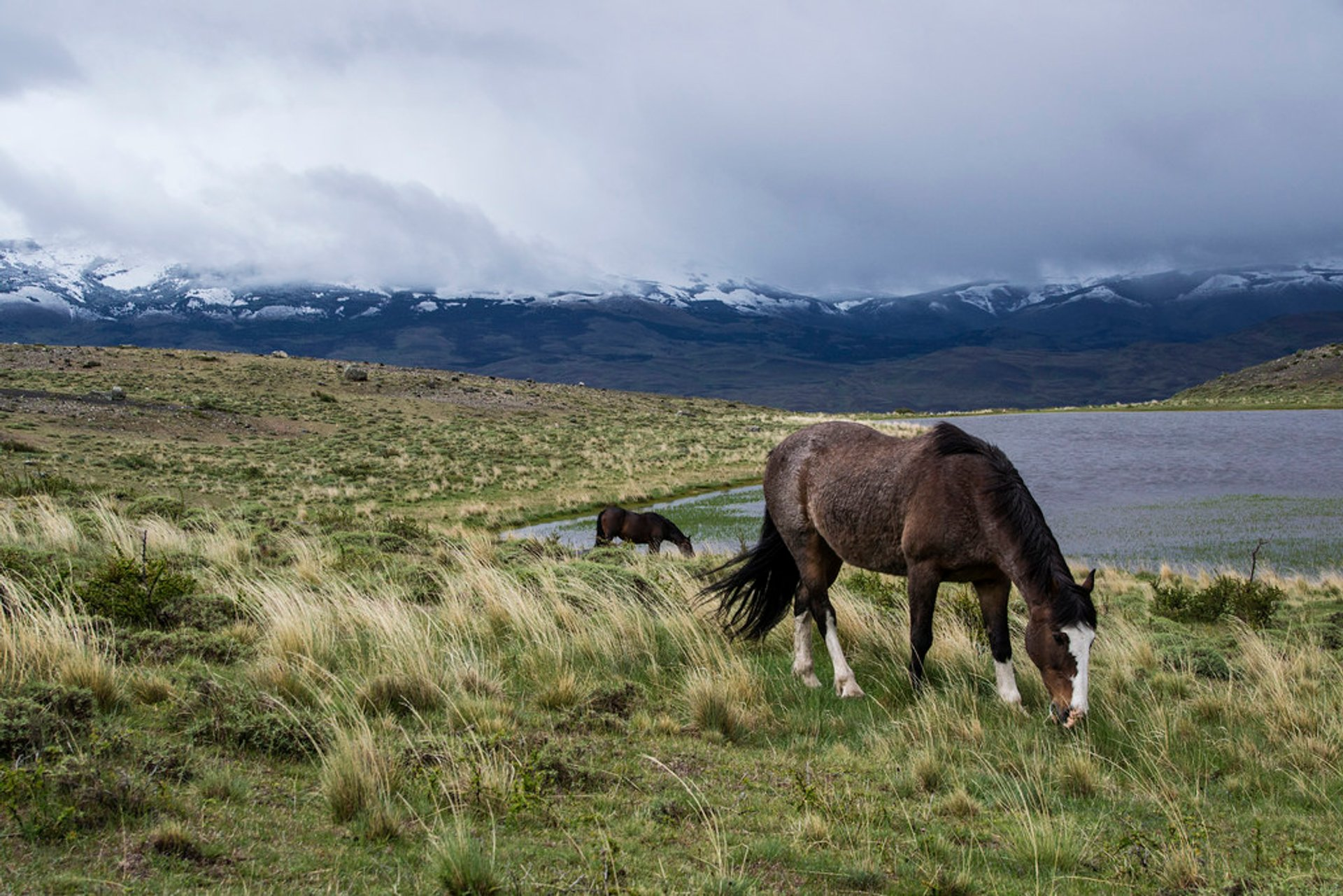 Wild Horses in Patagonia 2020 - Best Time