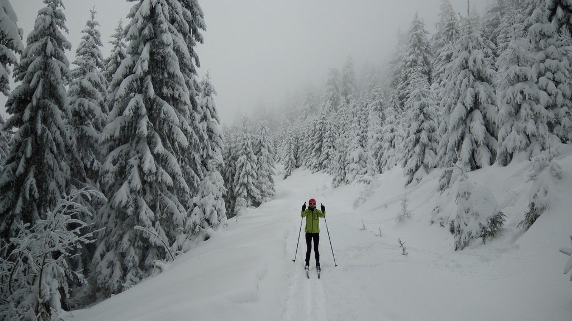 Horni Halze, near Klínovec 2019