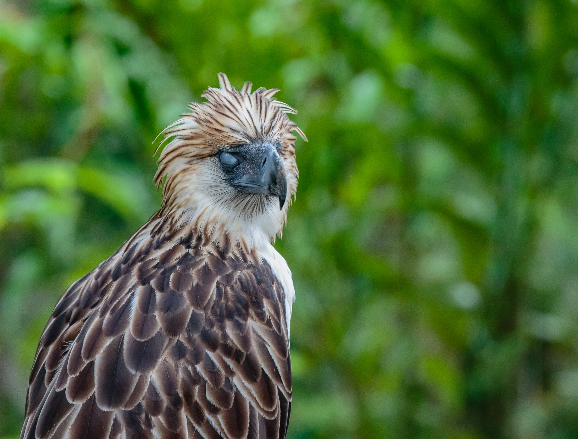 Best time to see Philippine Eagle in Philippines