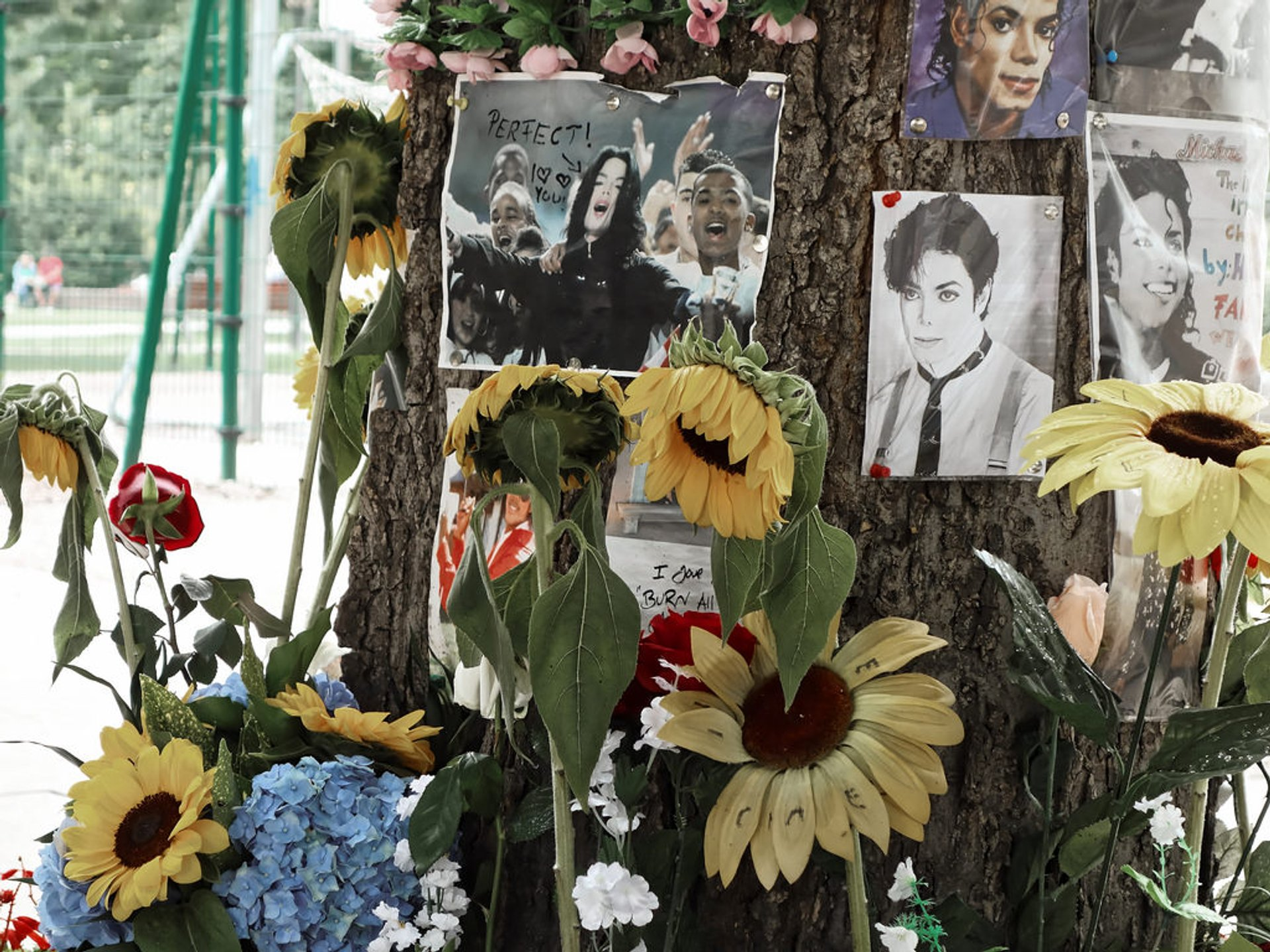 Michael Jackson Memorial Tree in Hungary 2020 - Best Time