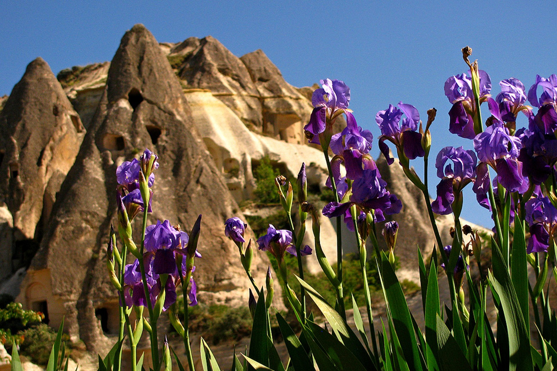 Spring Flowers in Goreme in Cappadocia - Best Season