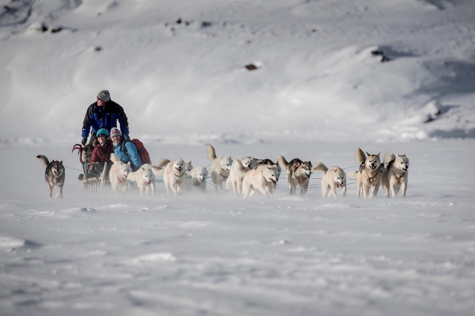 Dog Sledding in Greenland 2019 - Best Time