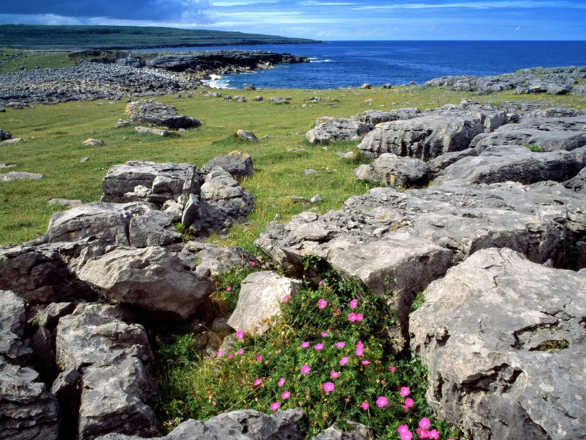Wildflowers of the Burren 2020