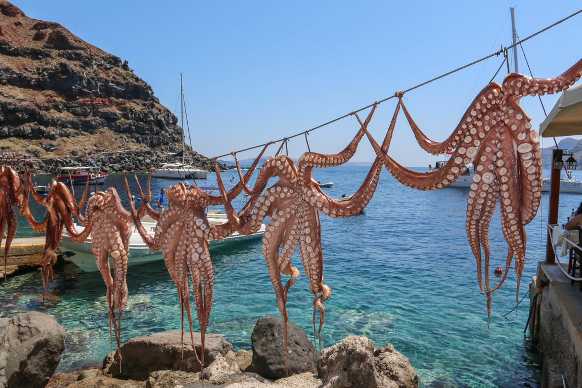 Octopus Season in Santorini 2020 - Best Time