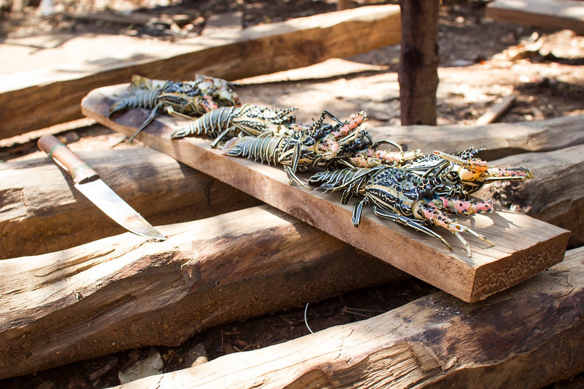 Lobster Season in Madagascar - Best Season 2020