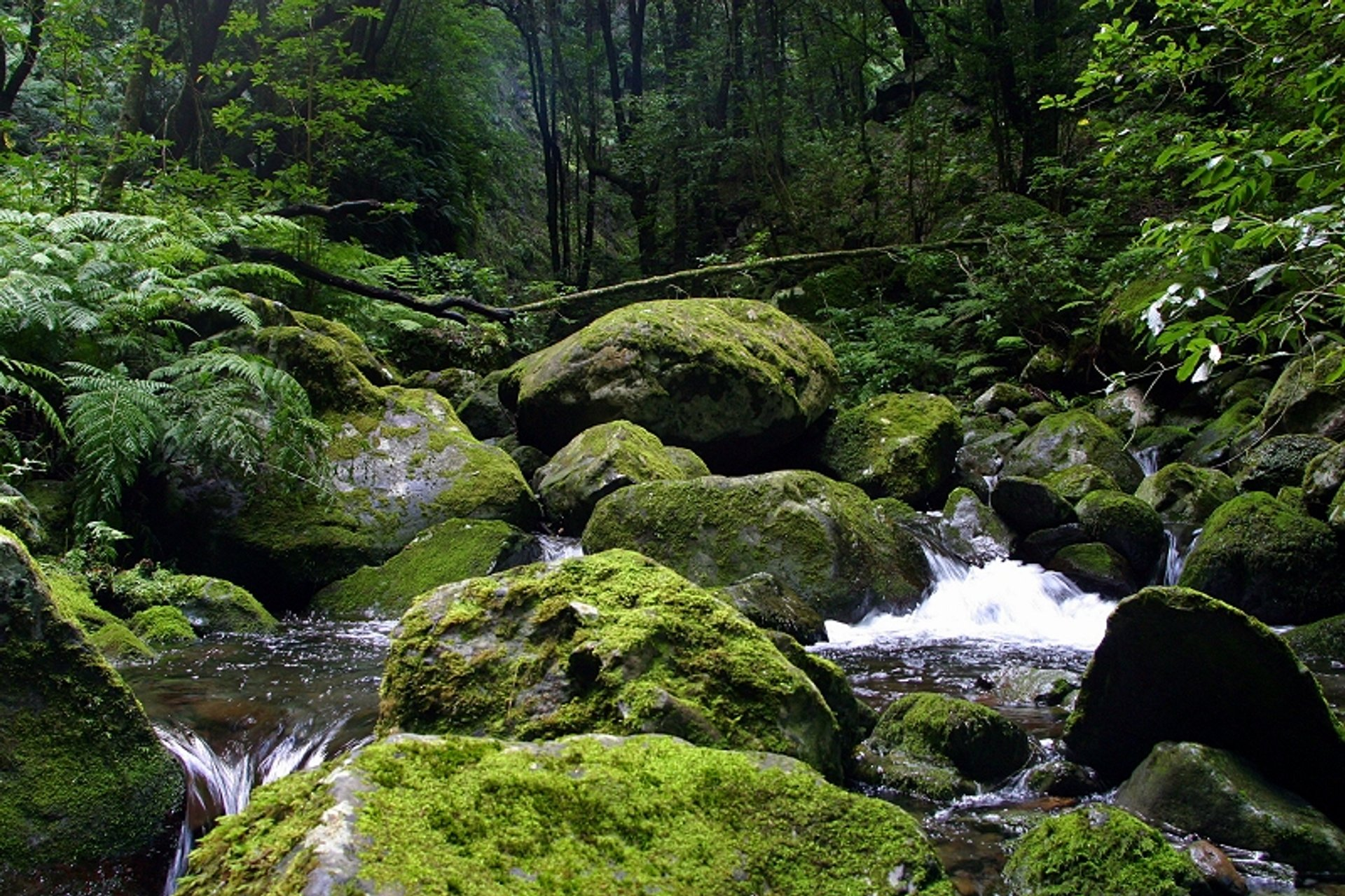 A magical place: Ribeiro Bonito, just before the source of the 'Levada do Rei', São Jorge, Madeira Island 2020