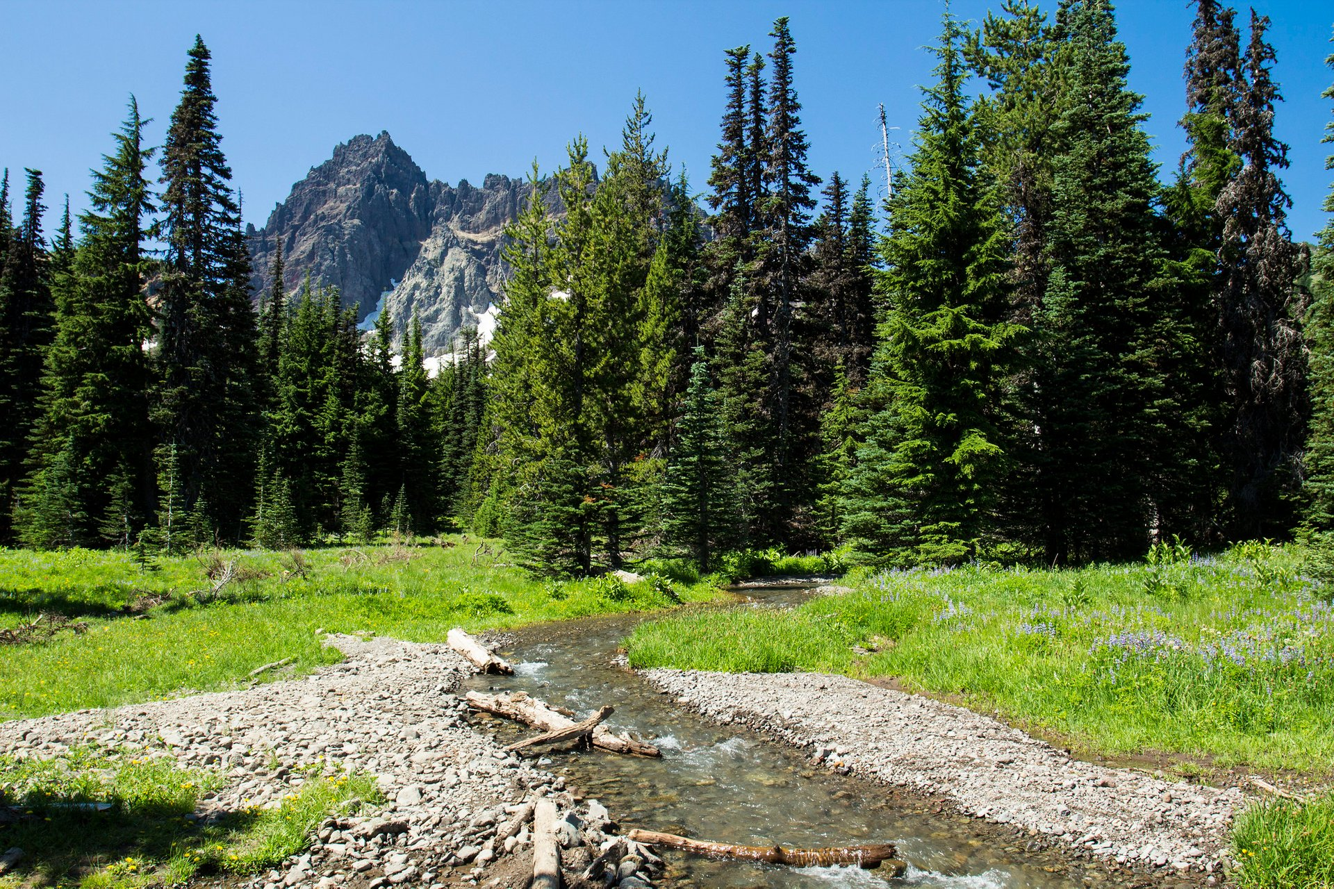 Canyon Creek Meadow. Three Fingered Jack in the background. 2020