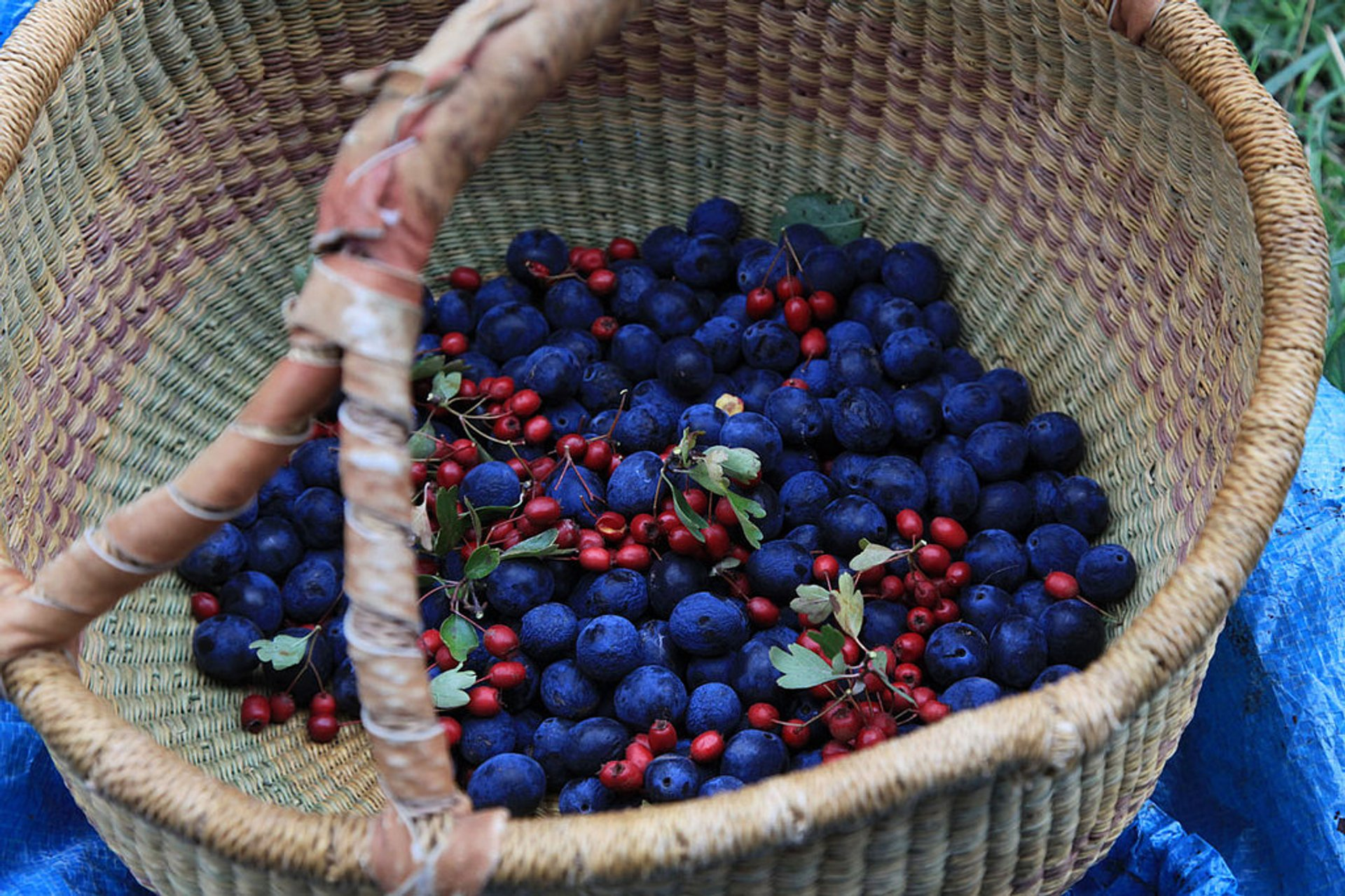 Berry Season in England 2019 - Best Time