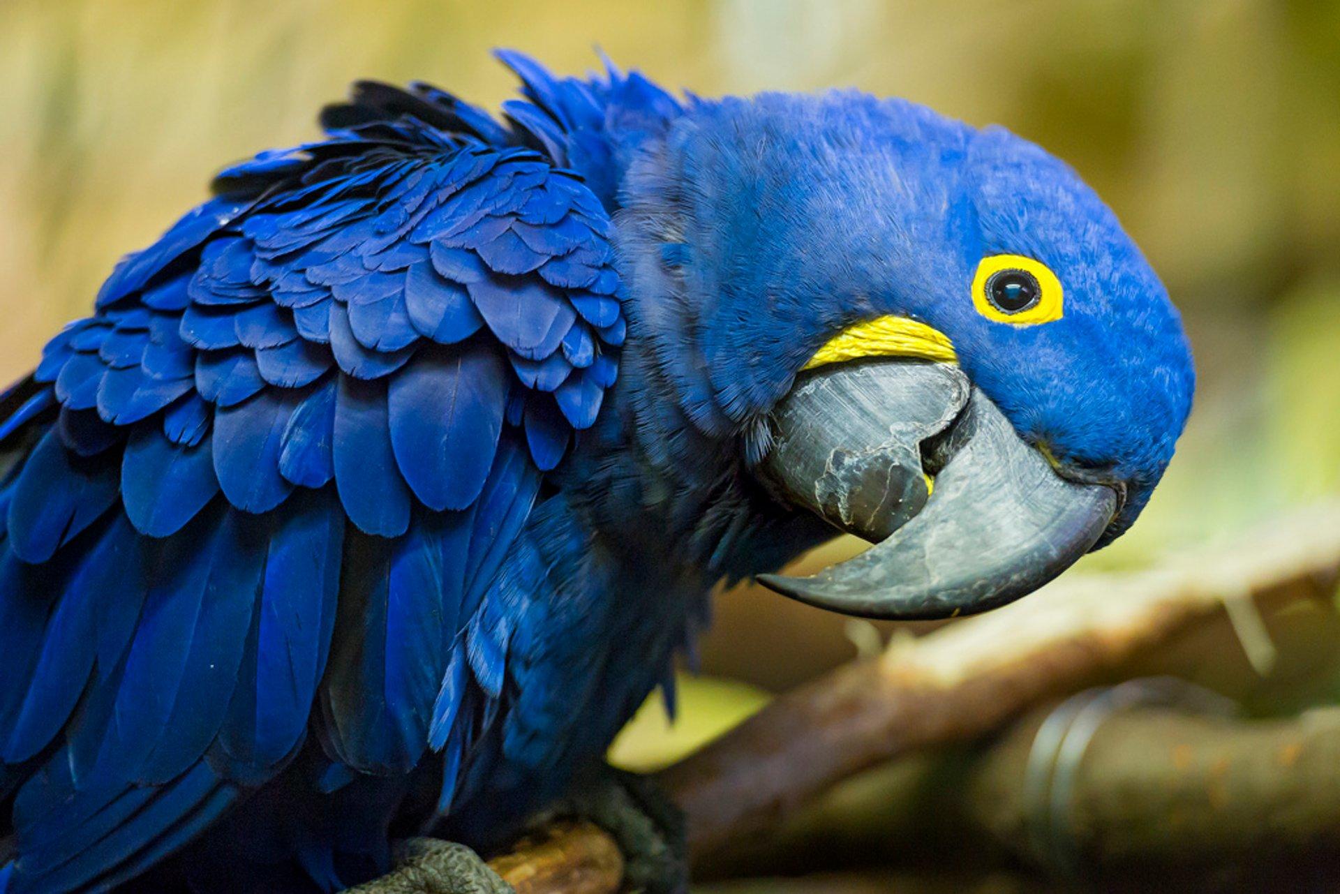Macaw 2020