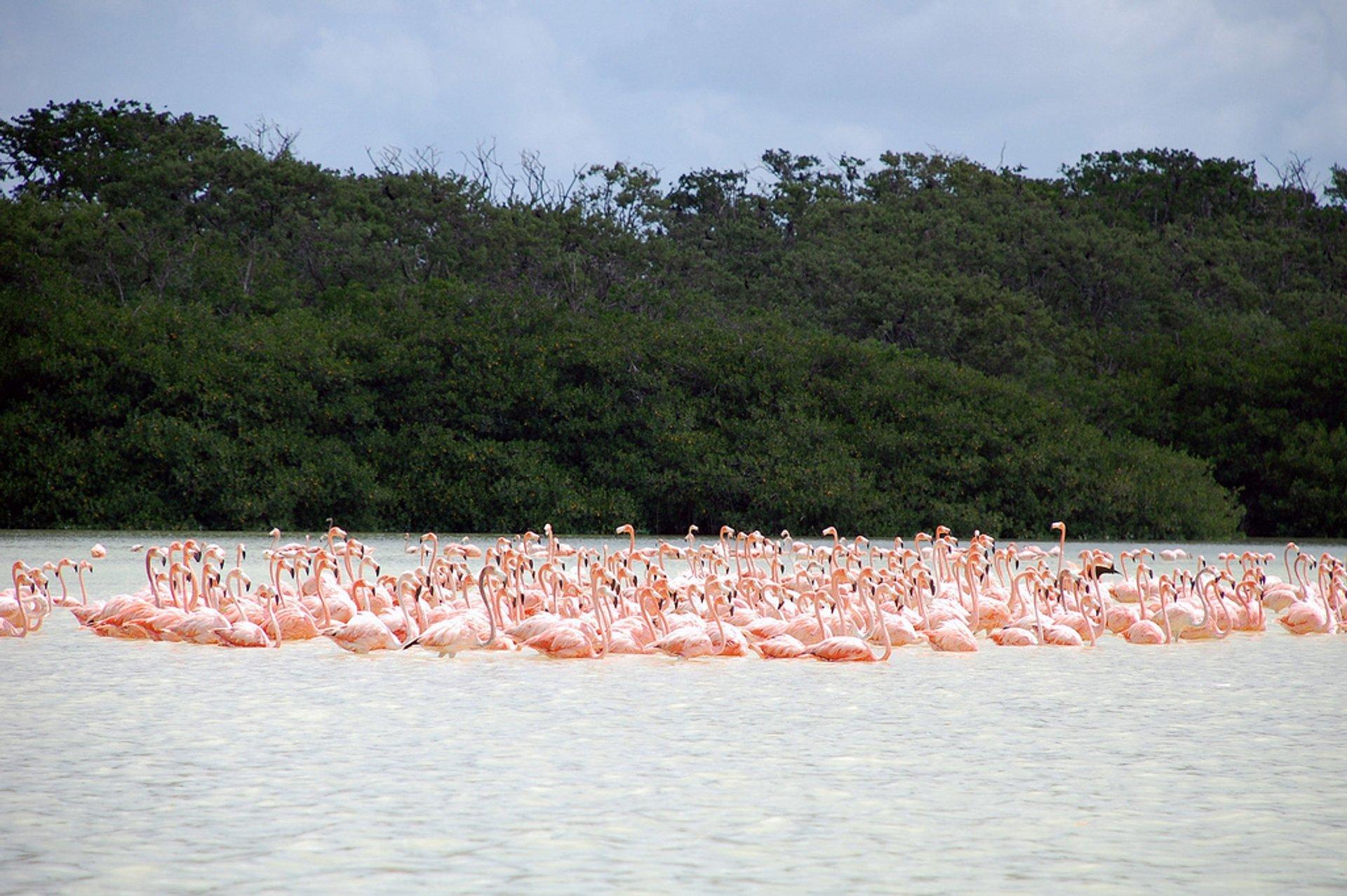 Celestun flamingos, Yukatan 2020