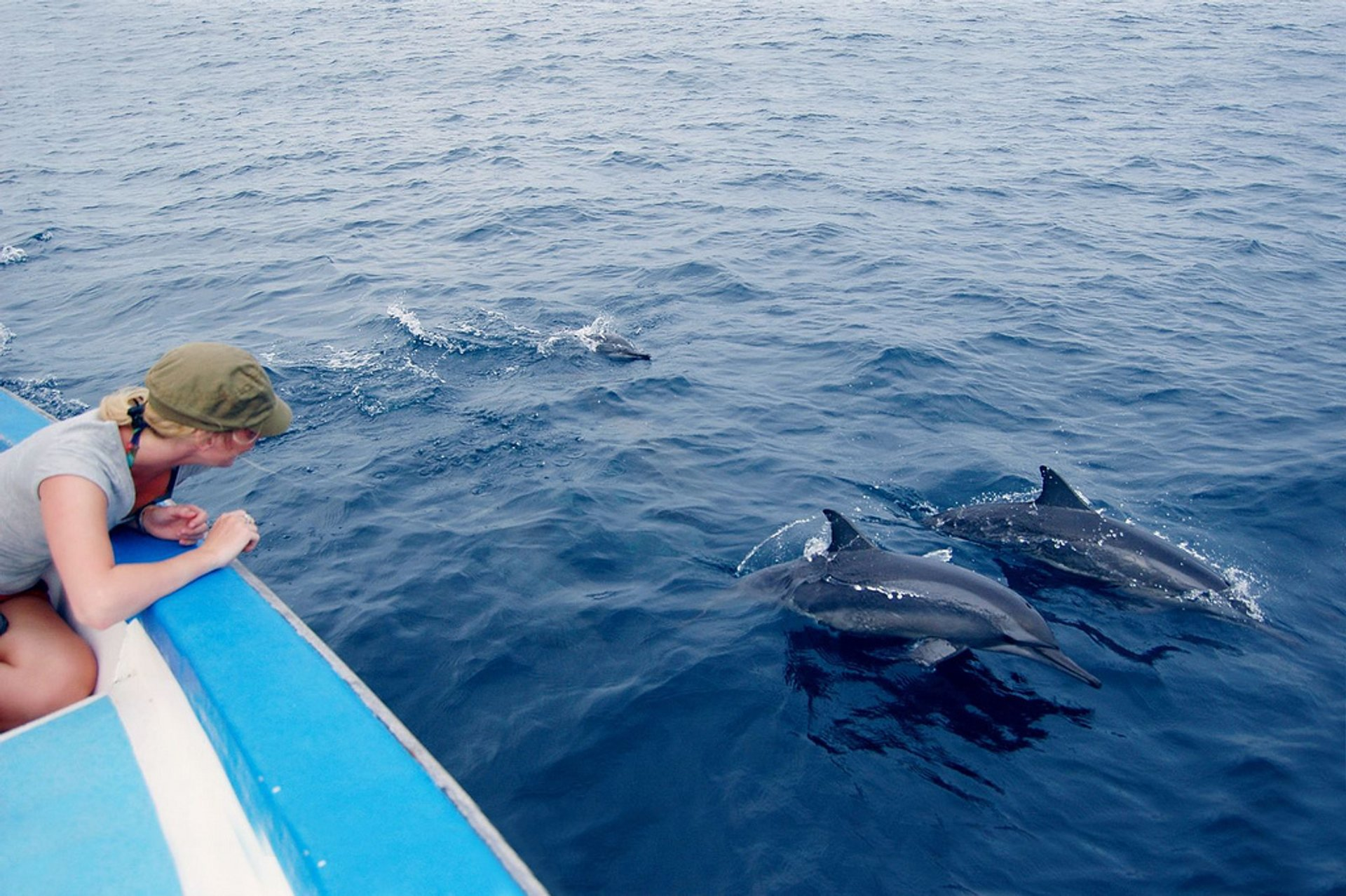Dolphin Watching in Maldives 2019 - Best Time