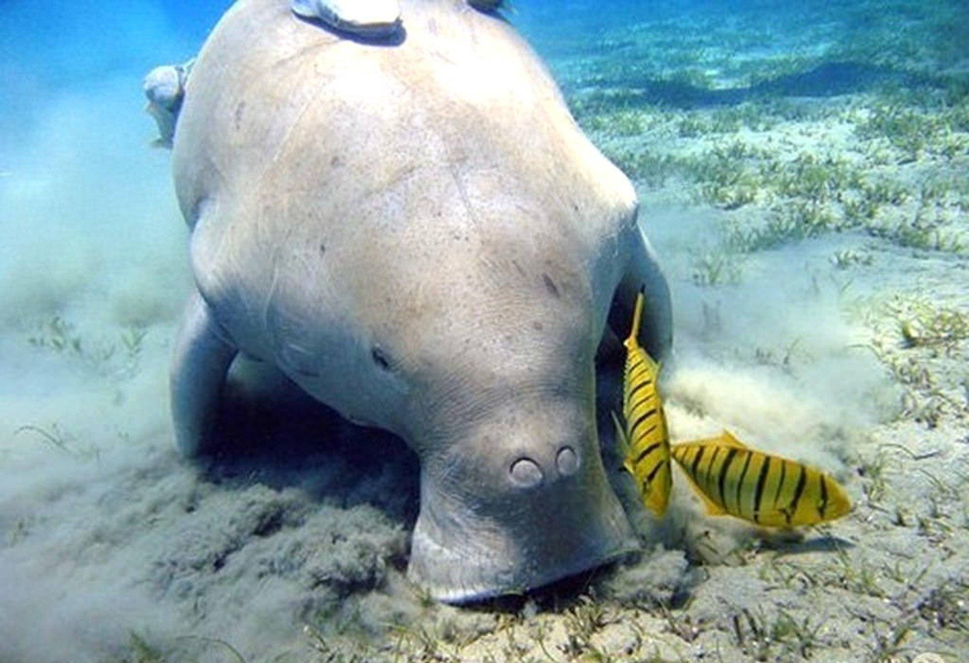 Scuba Diving in Vietnam 2020 - Best Time