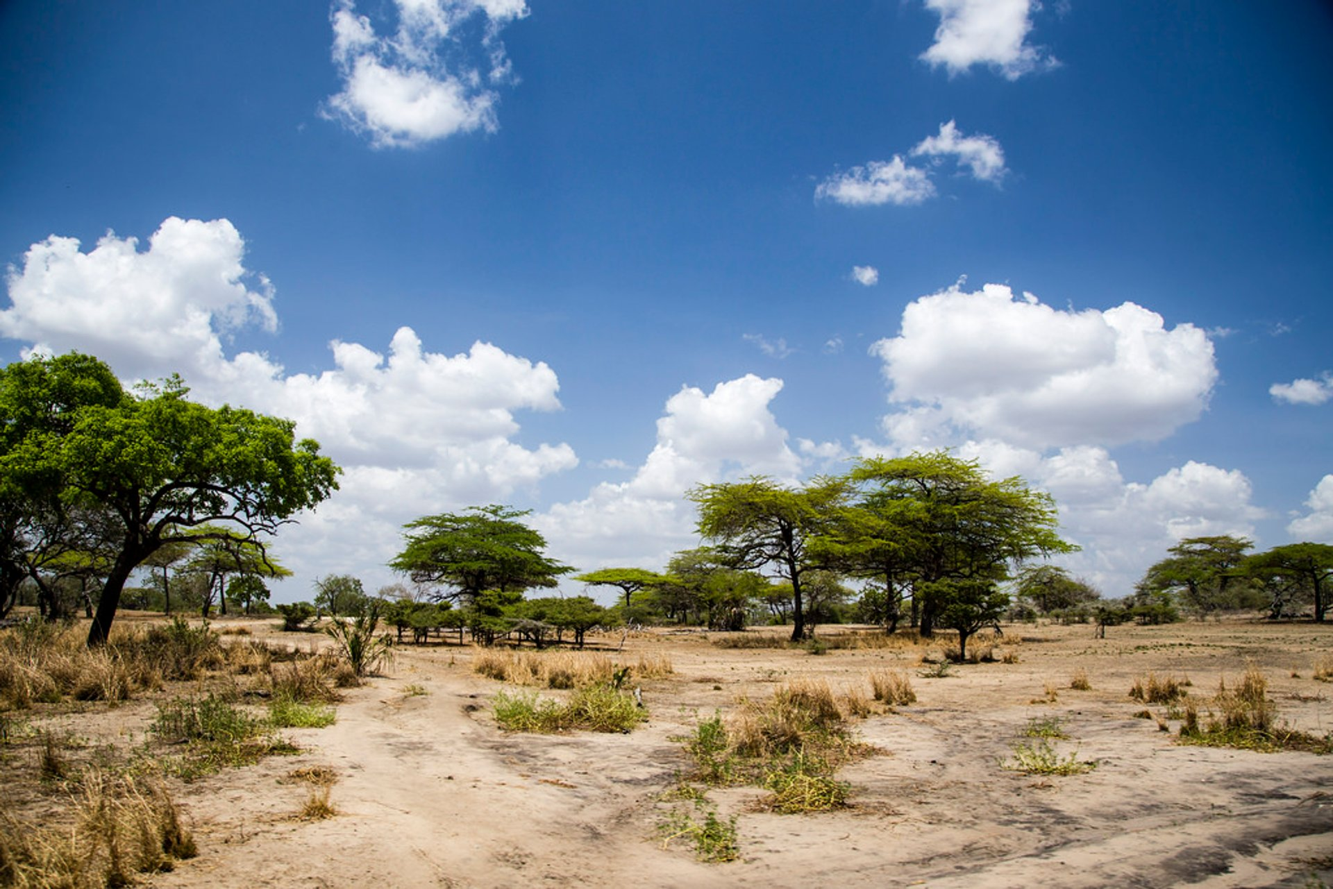 Short Dry Season in Tanzania 2019 - Best Time