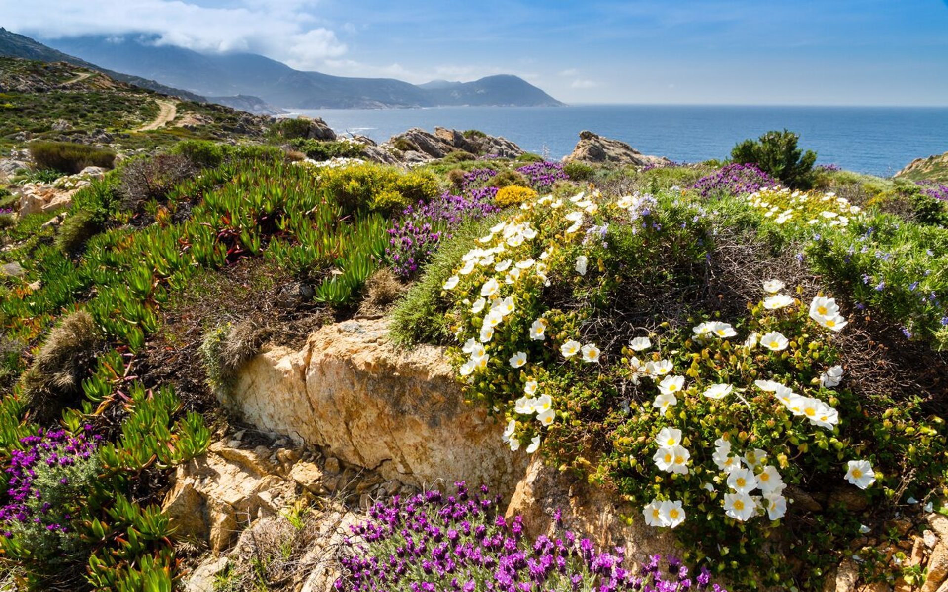 Best time for Wildflowers in Bloom 2020