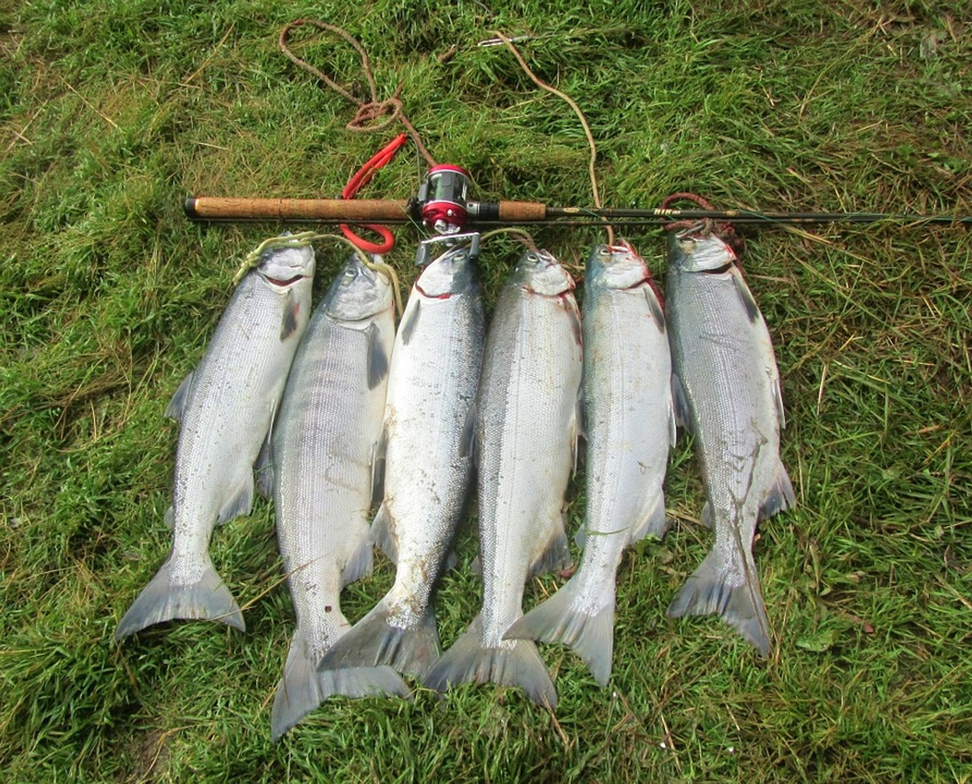 Salmon Fishing in Alaska - Best Season 2020