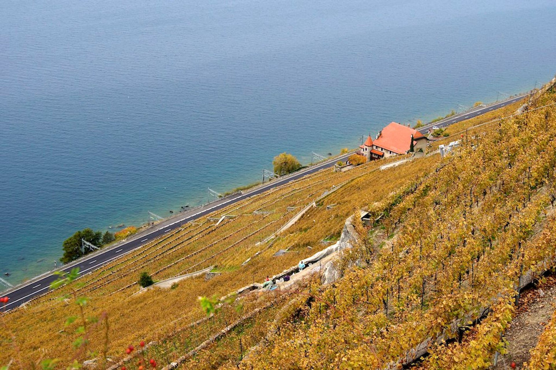 Grape Harvest and Wine Season in Switzerland 2019 - Best Time