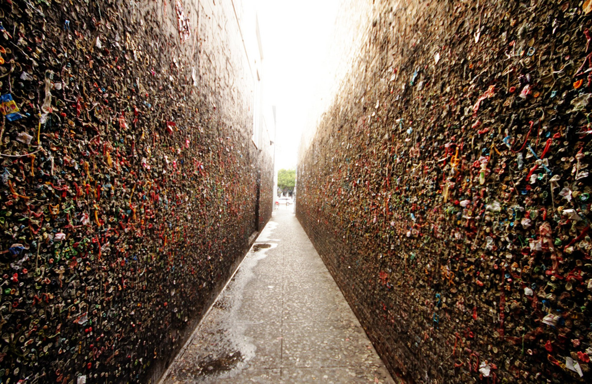 Bubblegum Alley in California - Best Season 2020