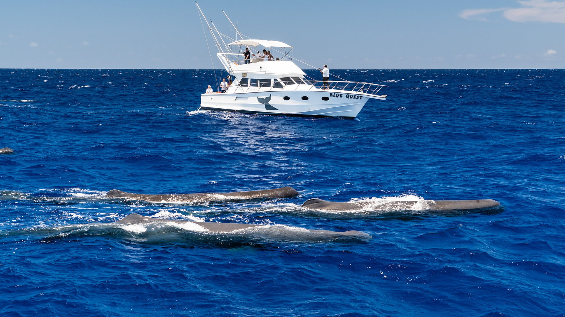 Whale Watching in Mauritius - Best Time
