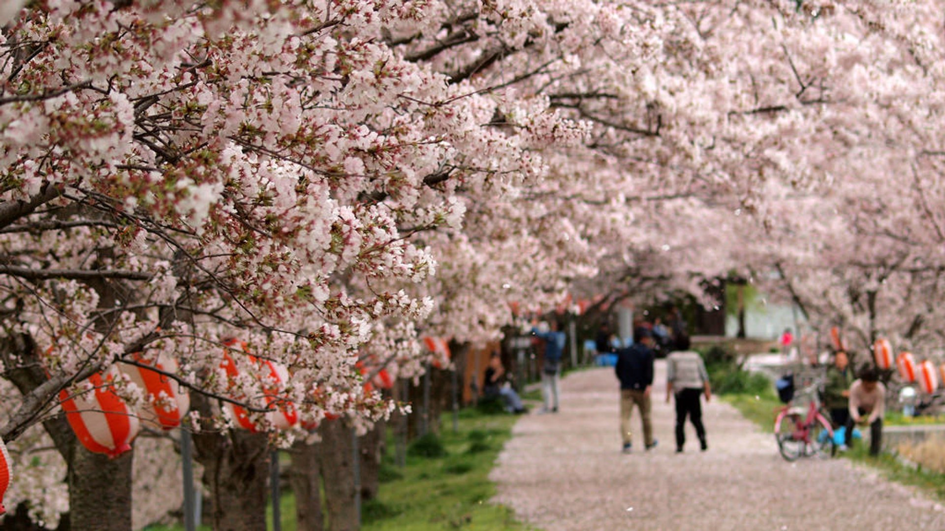 Spring in Japan 2020 - Best Time