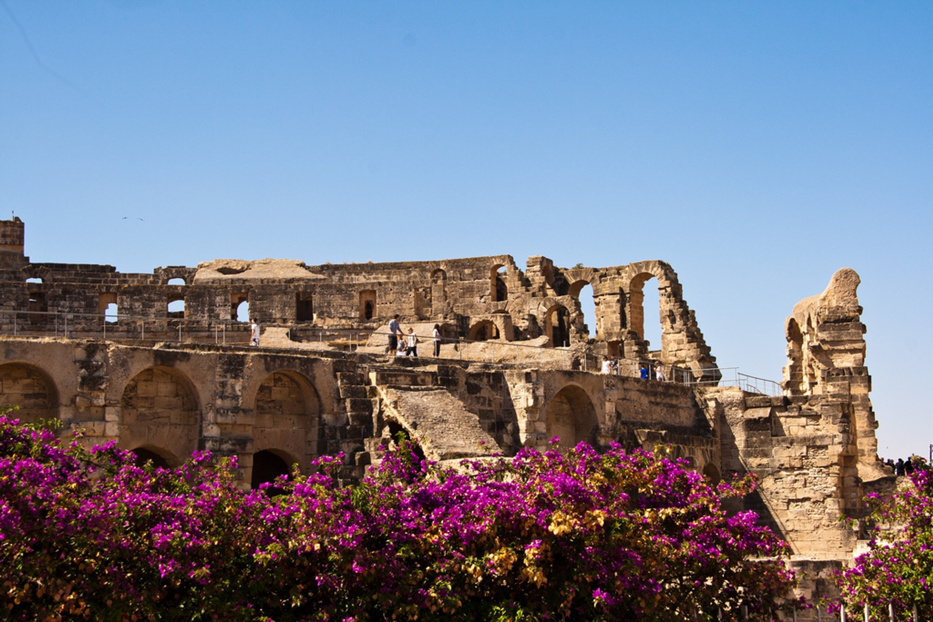 Bougainvillea Bloom in Rome - Best Season 2019