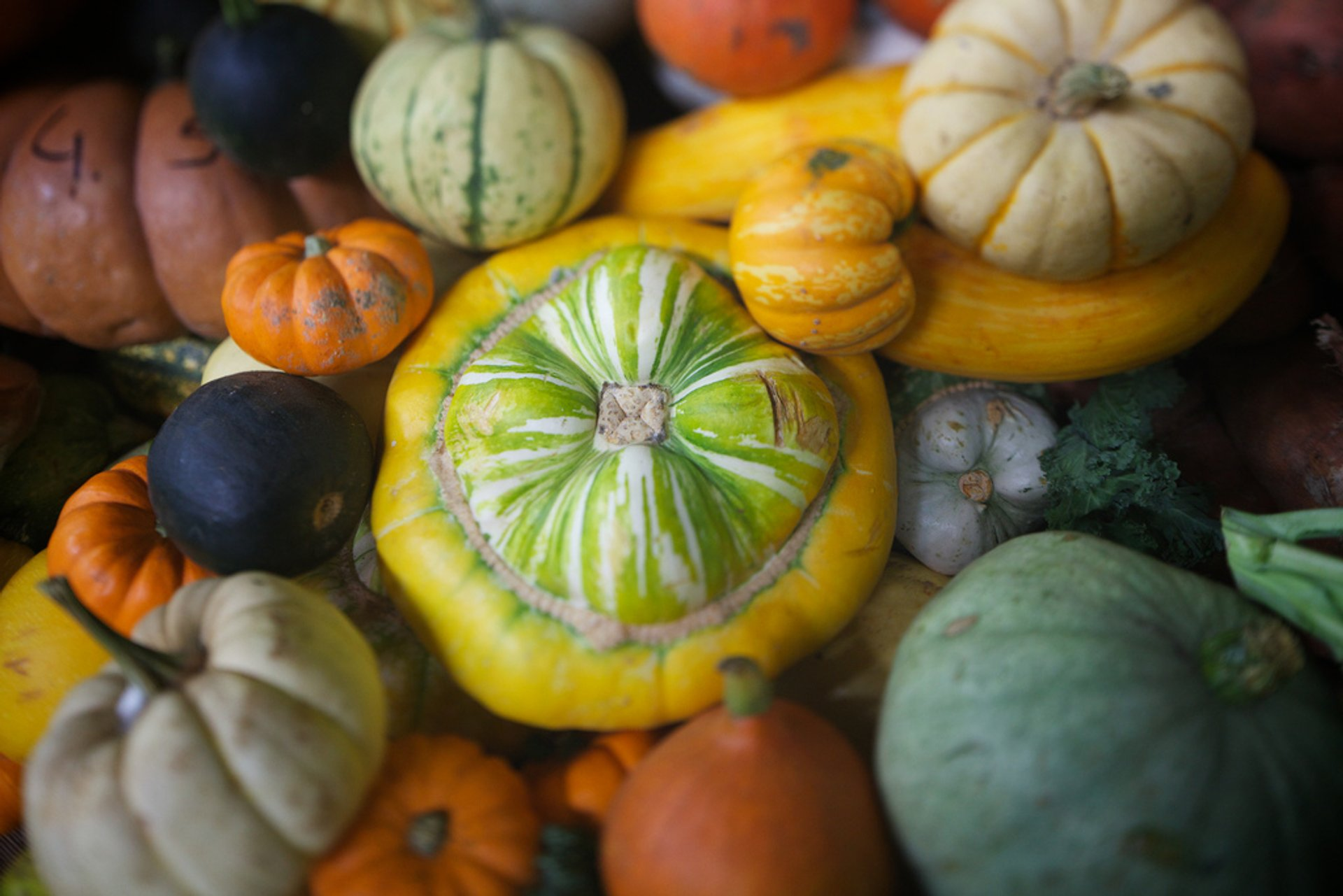 Pumpkin Season in England 2019 - Best Time