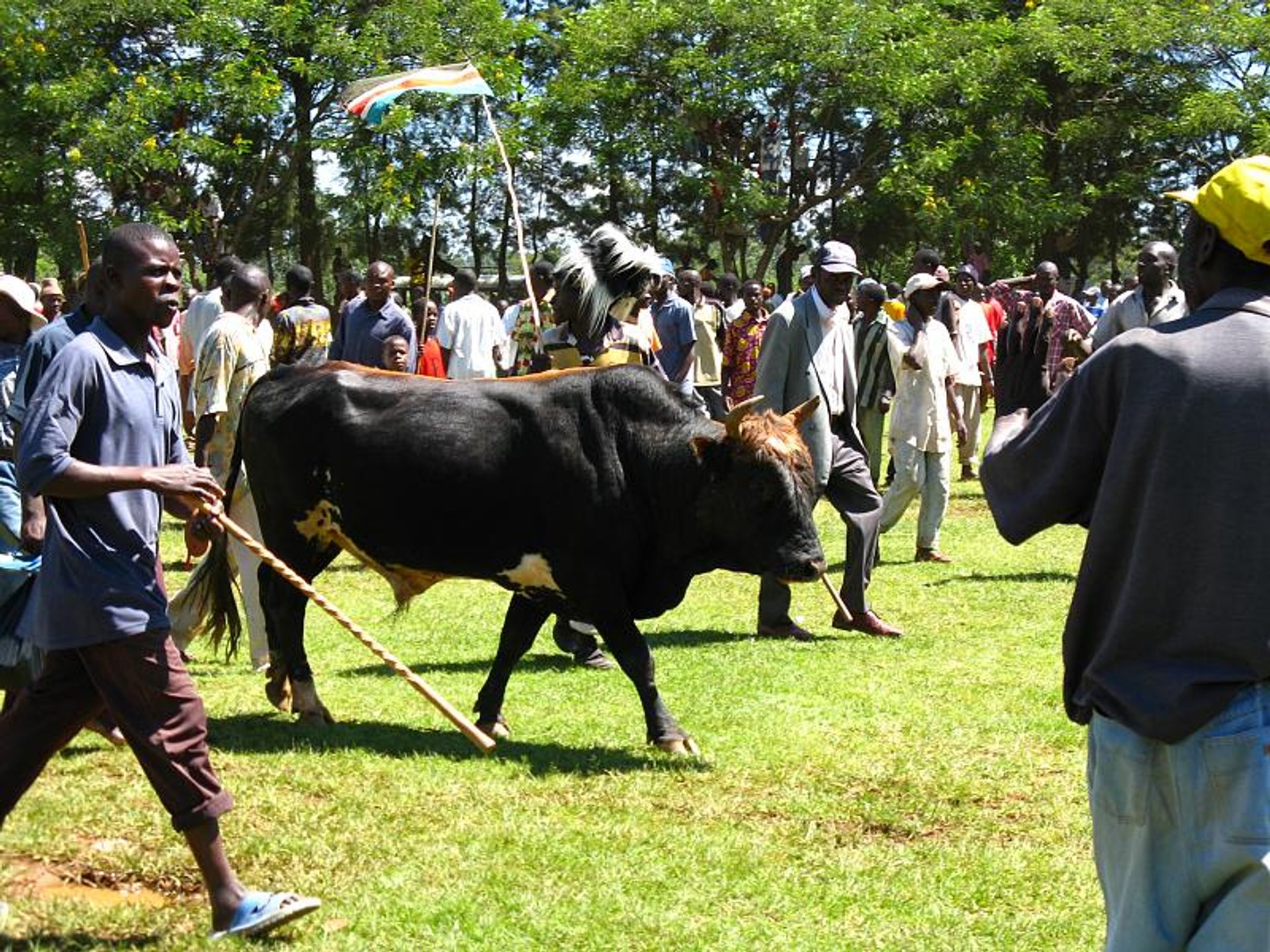 Bull Fighting Events in Kenya 2020 - Best Time