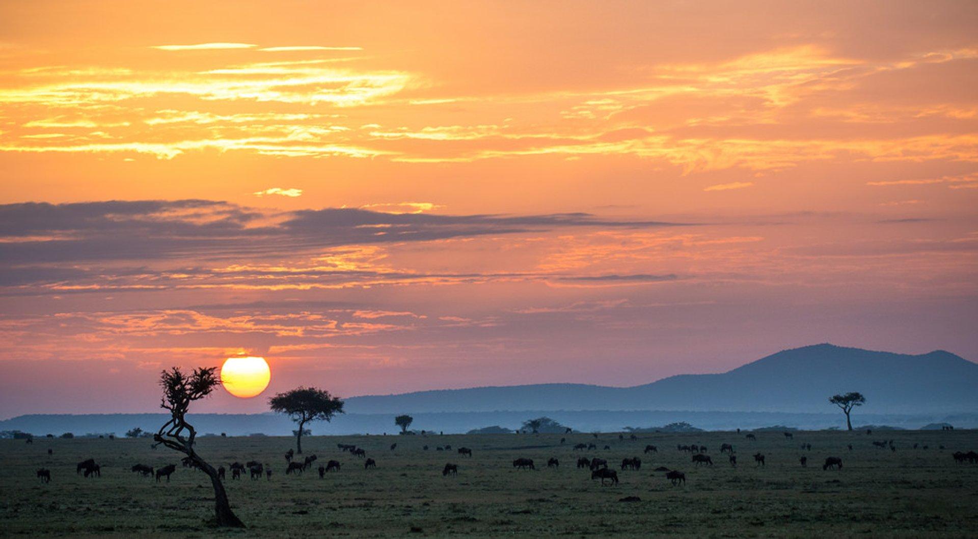 Dry Season in Kenya 2020 - Best Time