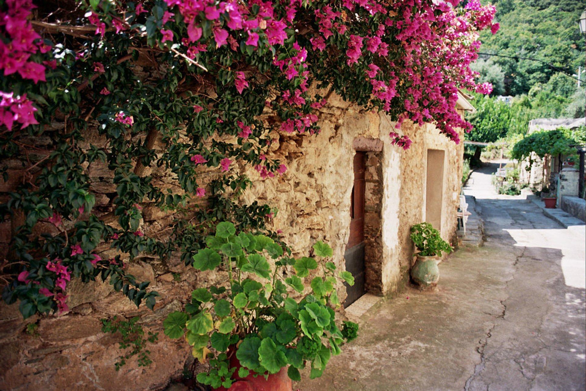 Wildflowers in Bloom in Corsica 2020 - Best Time