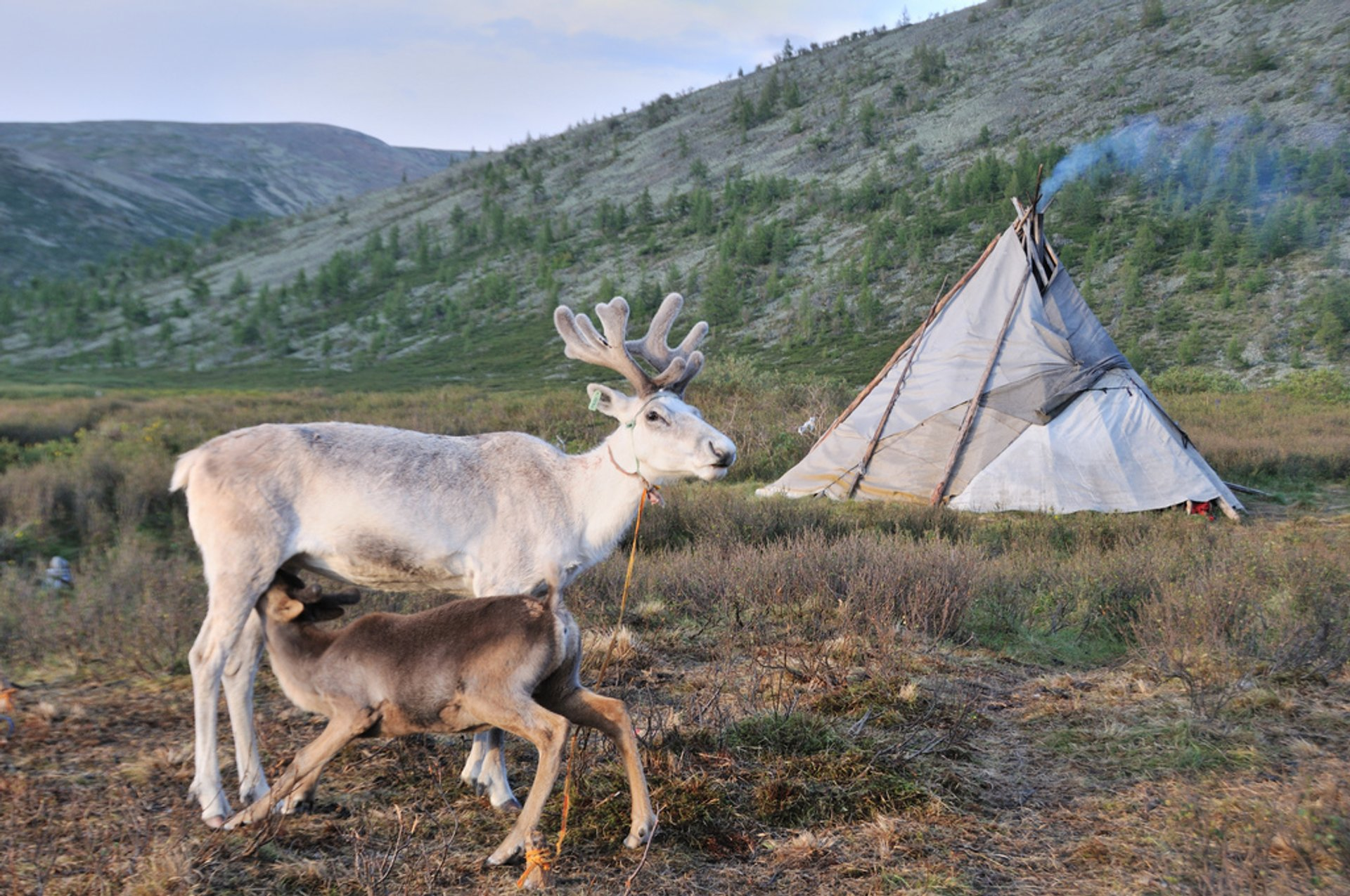 Best time to see Visiting Tsaatan Tribe