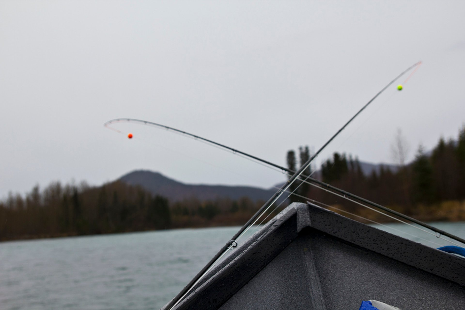 Rainbow Trout Fishing in Alaska - Best Season 2019