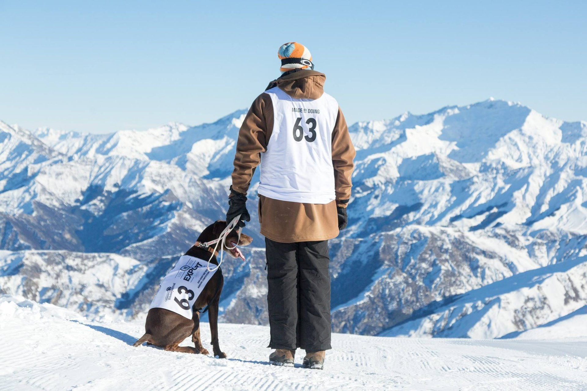 Best time to see Monteith's Dog Derby in Queenstown in New Zealand 2019