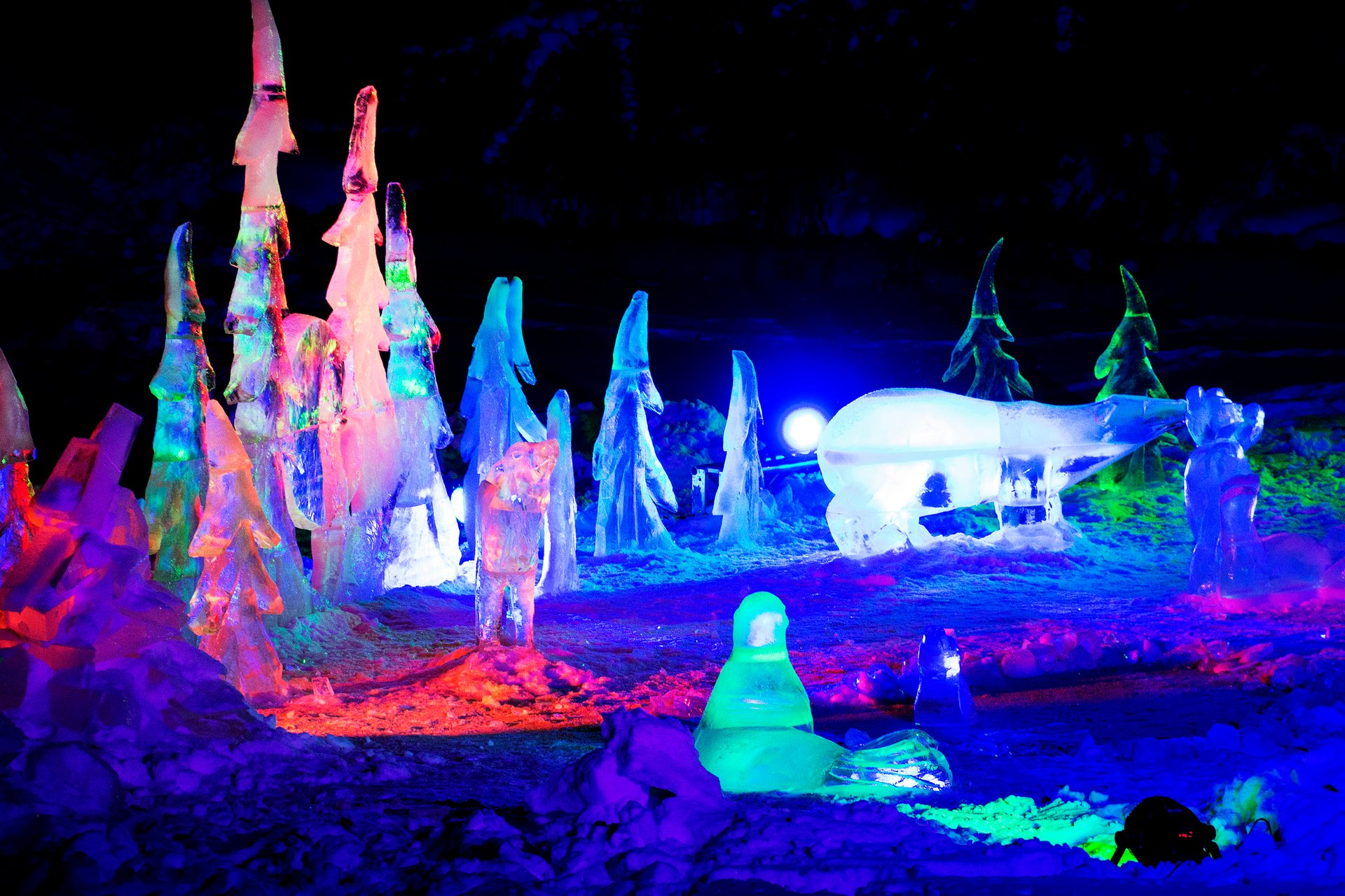 Zoominescence Festival of Light in Edmonton - Best Season 2020