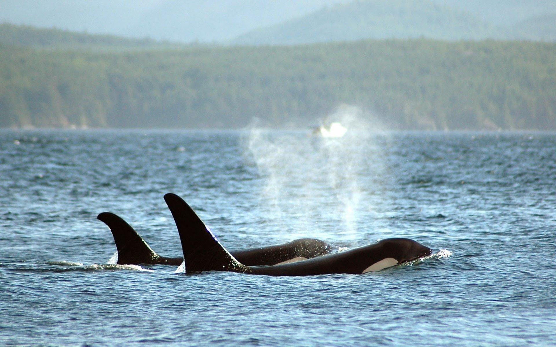 Whale Watching in British Columbia - Best Season 2020
