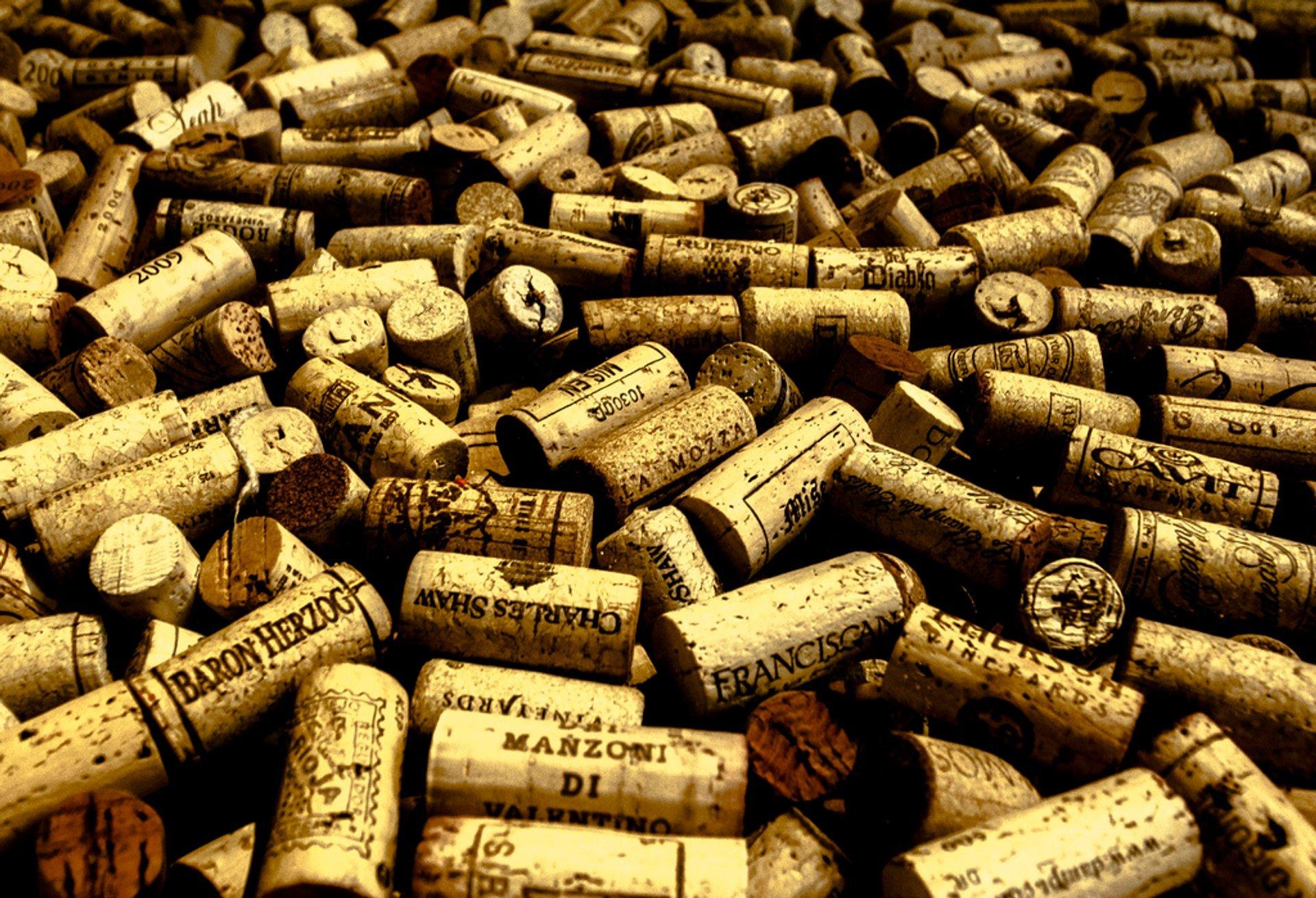 Sea of cork 2020