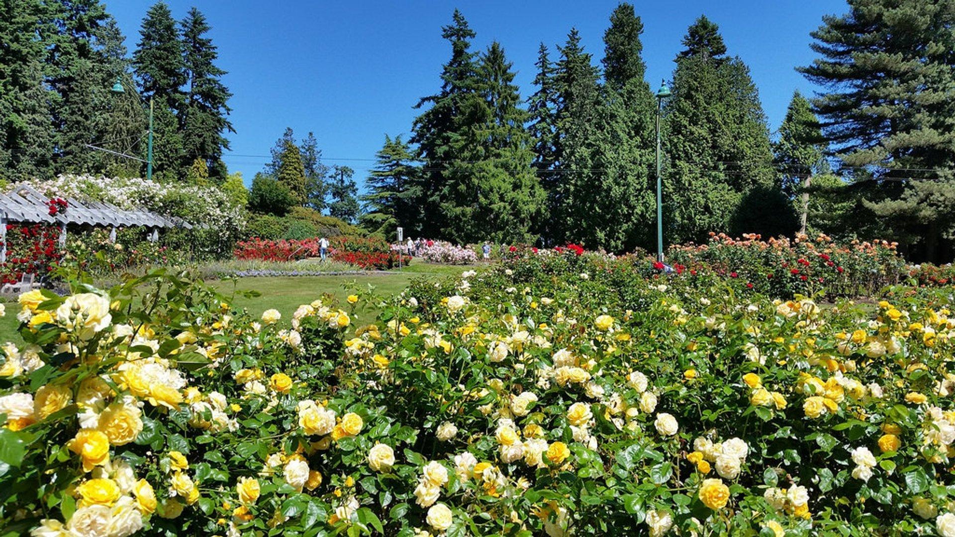 Stanley Park Rose Garden 2020