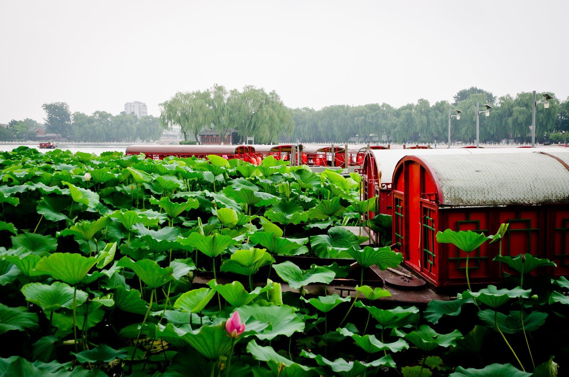 Lotus Market in Beijing 2020 - Best Time