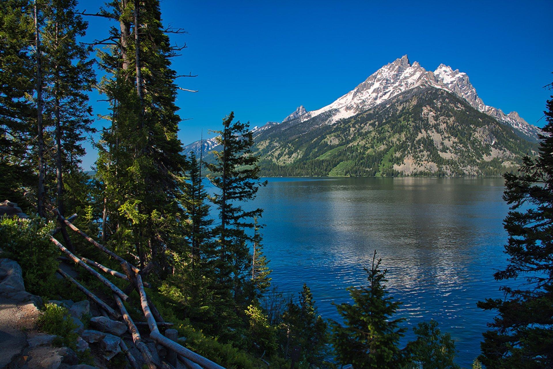 Jenny Lake Vista 2020
