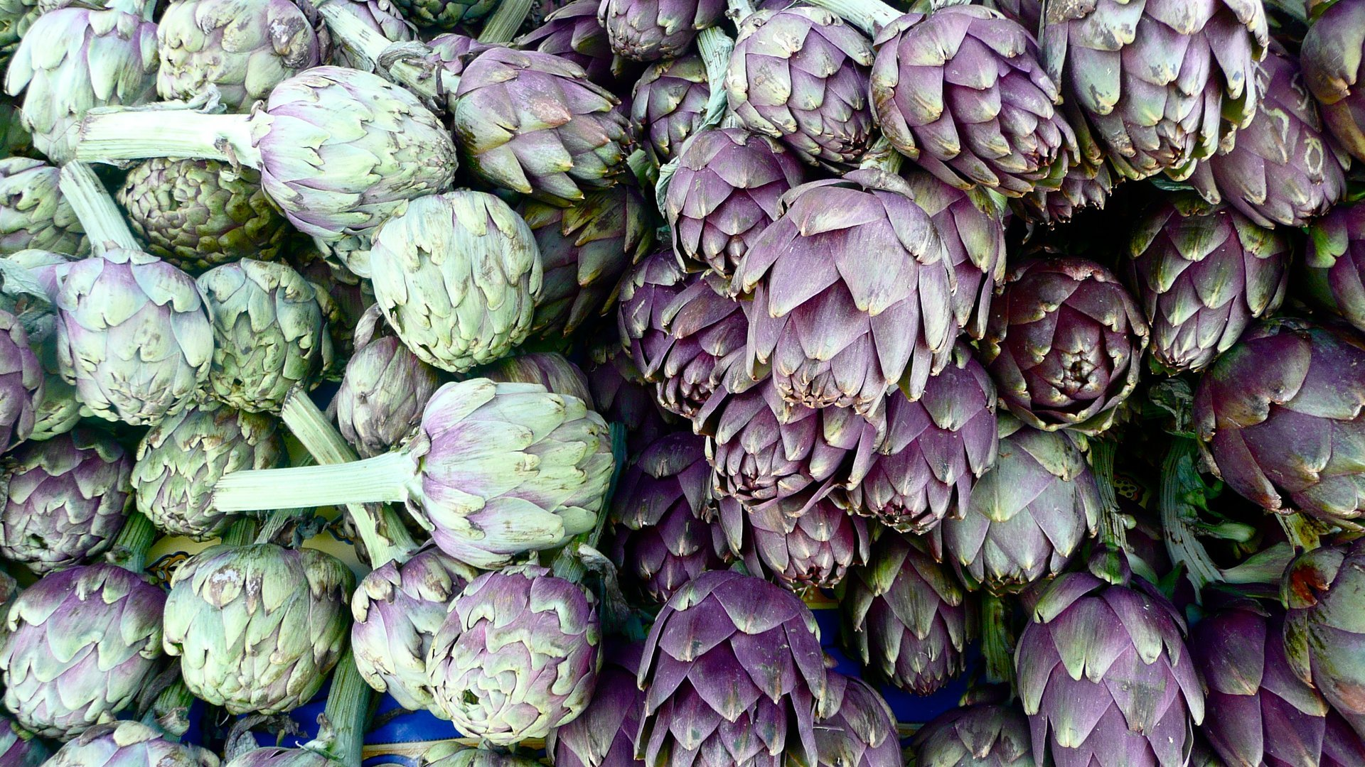 Artichokes in Amalfi Coast 2019 - Best Time
