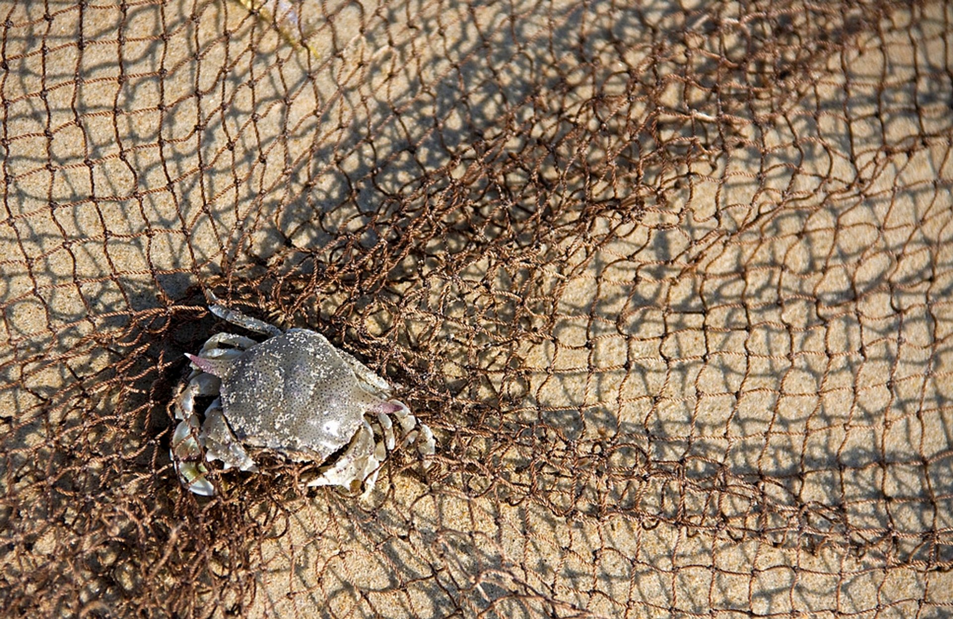 Crab Catching in Goa 2020 - Best Time