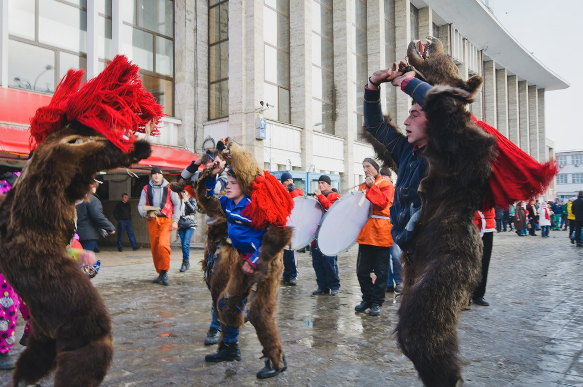 New Year Bears in Romania 2019 - Best Time