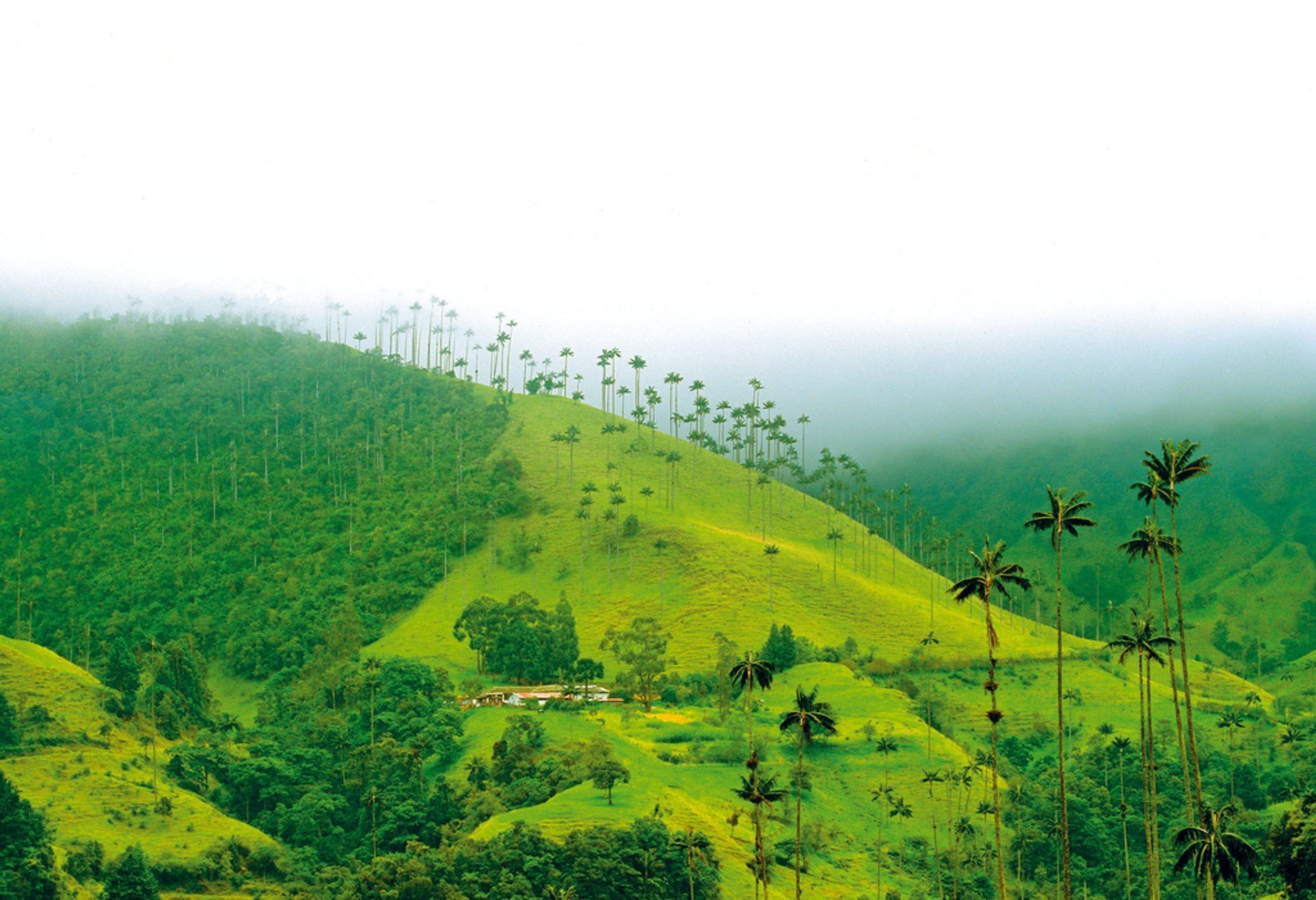 Trekking in the Cocora Valley in Colombia 2020 - Best Time