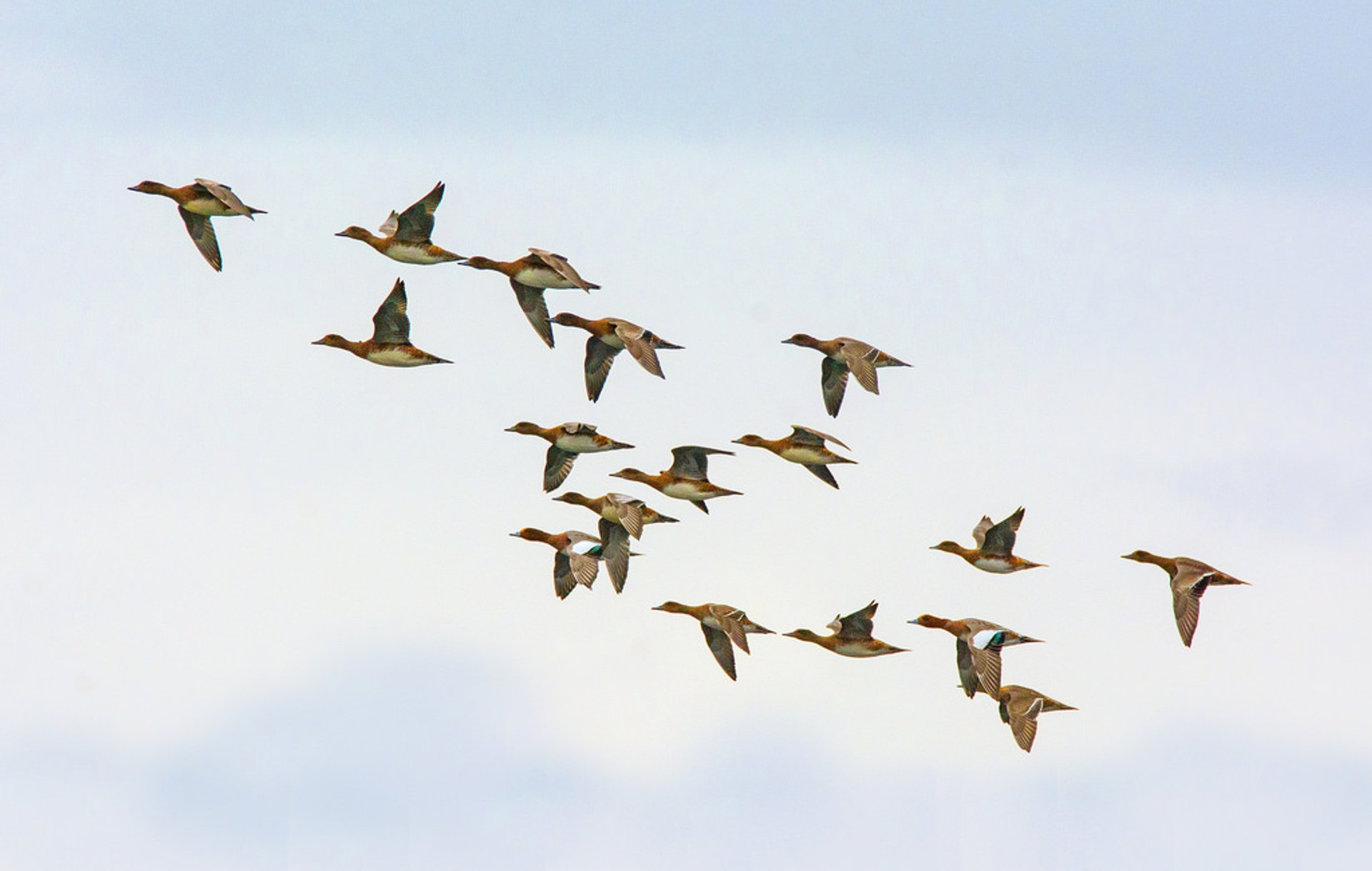 Autumn Migrations in Norway 2020 - Best Time