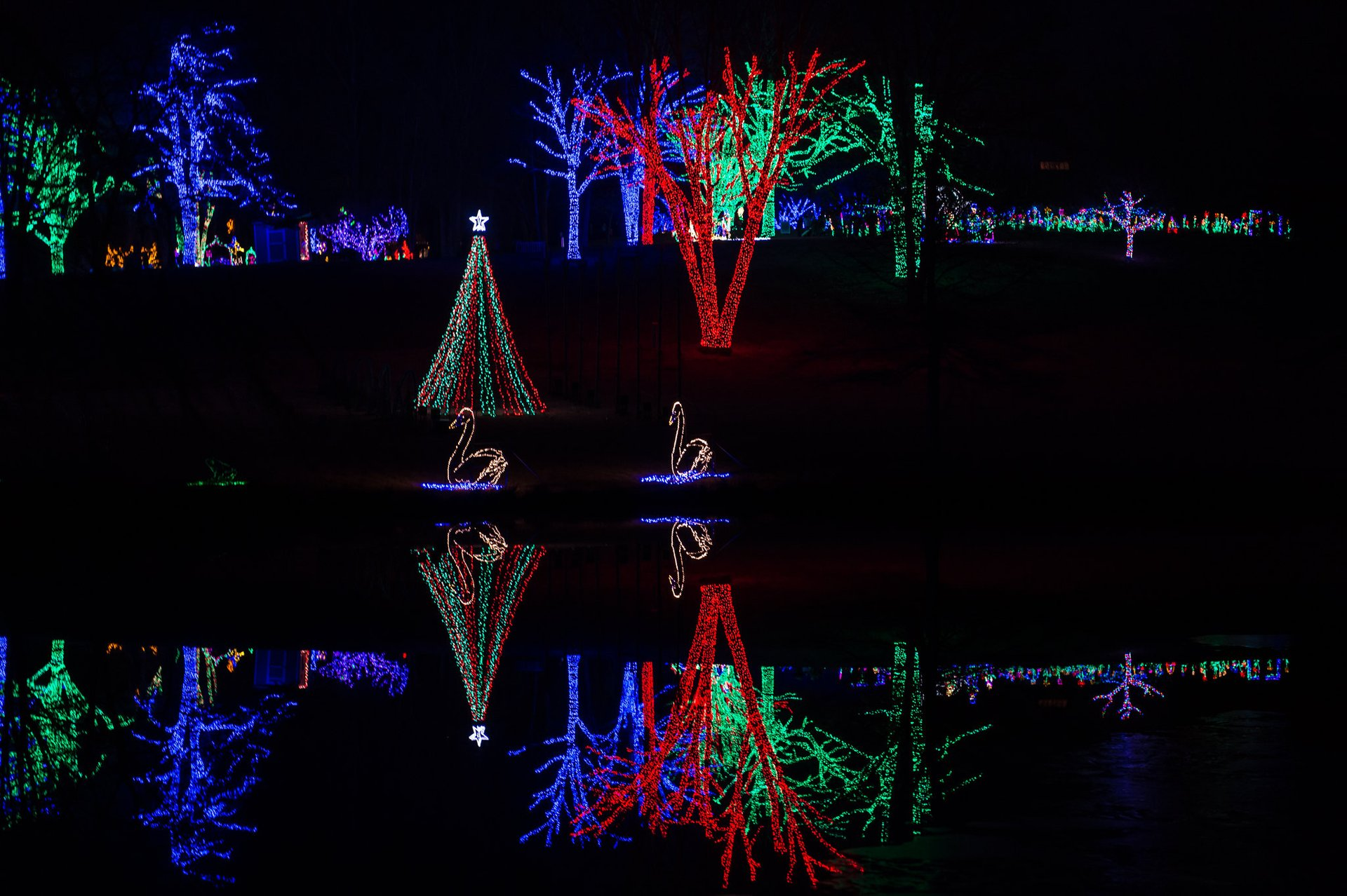Winter Walk of Lights at Meadowlark Botanical Gardens in Virginia - Best Season 2020