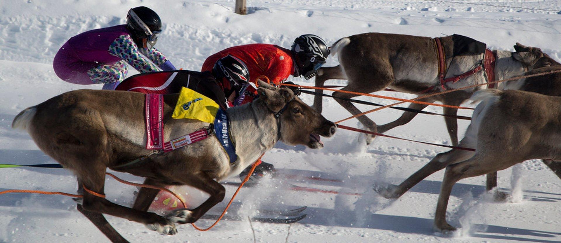 Reindeer skijoring race, Kautokeino 2020