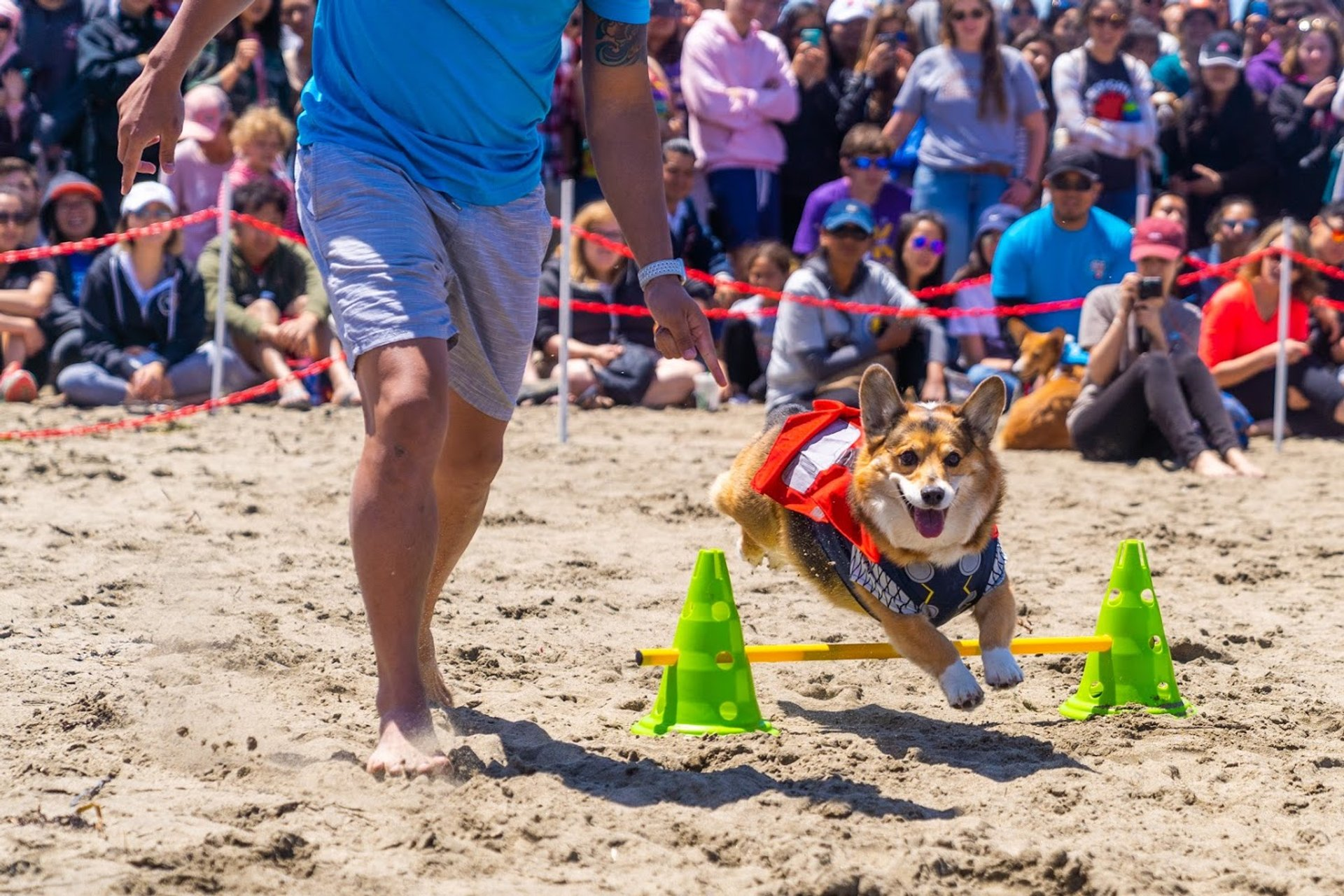 Best time to see Corgi Con in San Francisco 2020