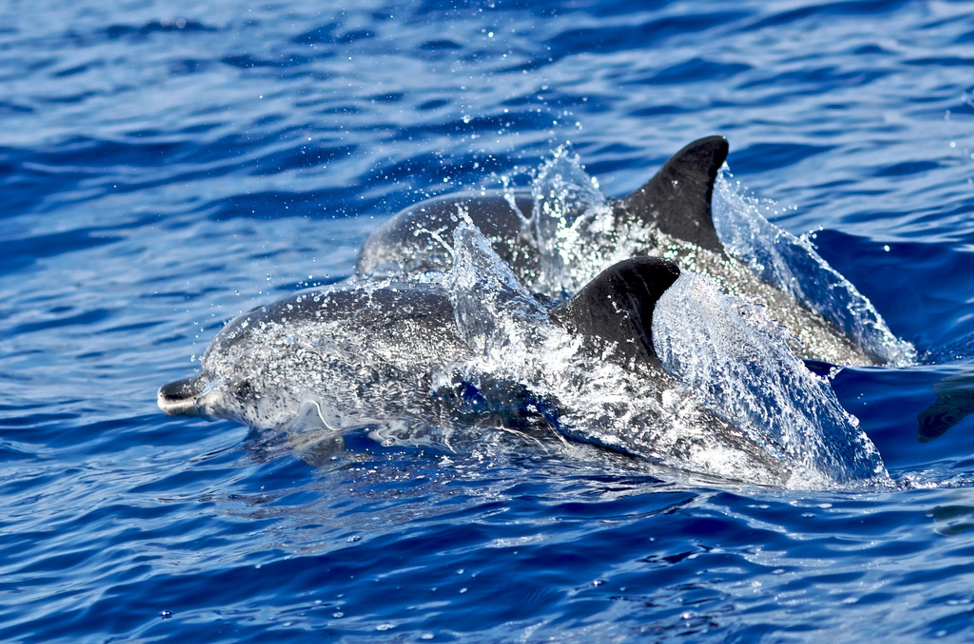 Whale and Dolphin Watching in Madeira 2020 - Best Time
