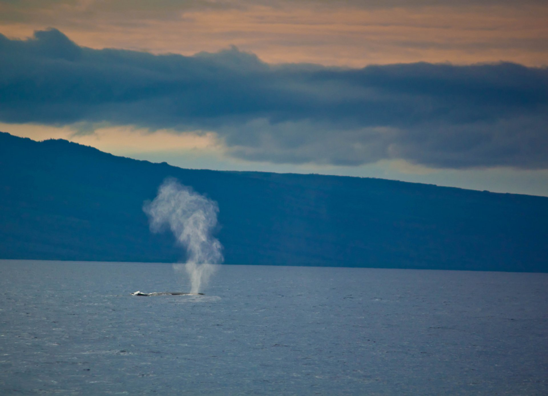 Whale Watching in Hawaii - Best Season