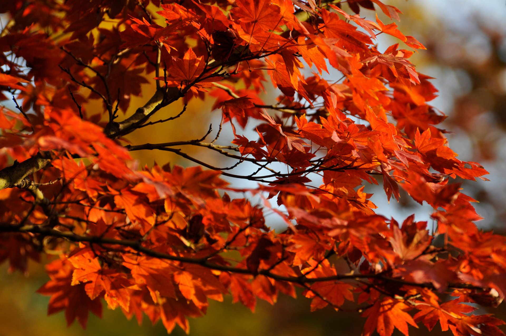 Autumn in Japan 2020 - Best Time